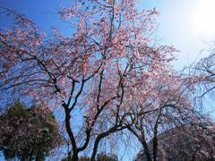 togokusanfruitspark08april2012-2.jpg